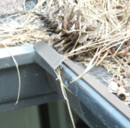 in-this-close-up-you-can-see-how-easily-pine-straw-builds-up-on-these-amerimax-vinyl-gutter-guards-especially-on-the-version-with-the-mesh-covering