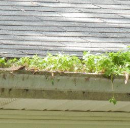 gutter-neglected-for-a-long-time