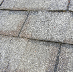 shingles-with-spider-web-type-cracks